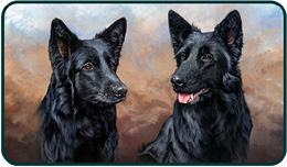 Pet Portraits - Misty and Leah